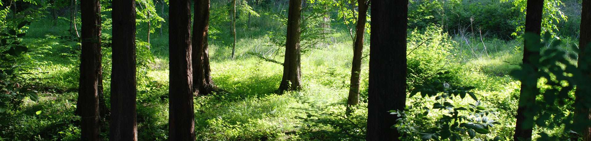 muskoka-forest-maintenance.min_