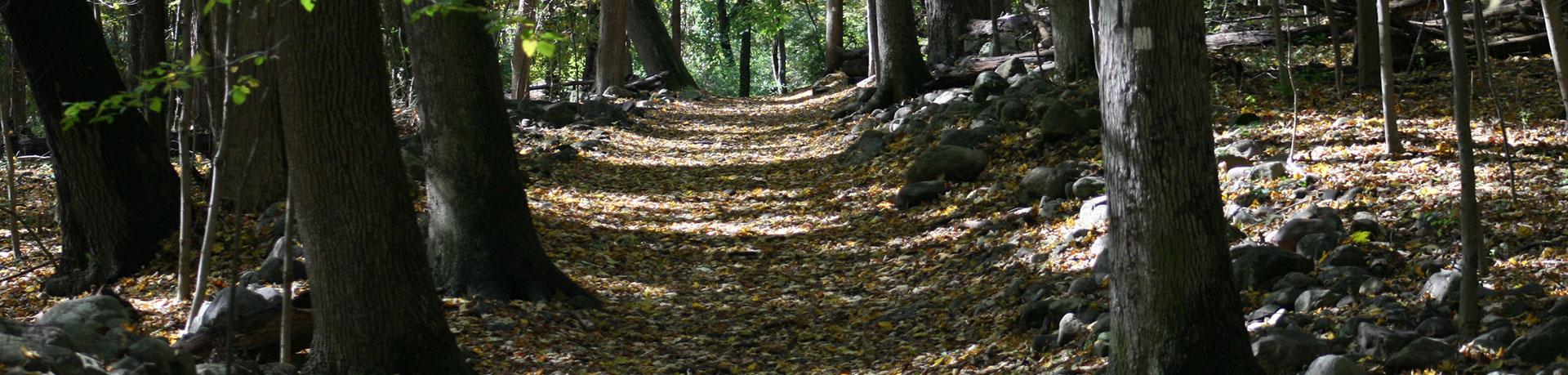 muskoka-trail-creation.min_